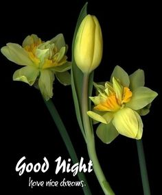 Good Night Blessings, Good Night Wishes, Good Night Quotes, Disney Kiss, Good Night Flowers, Evening Quotes, Nice Dream, Good Morning Photos, Good Night Image