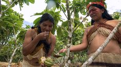 The the indigenous peoples of the Amazon are far removed from the Paris conference rooms where politicians and technocrats in dark suits hashed out a historic deal on curbing climate change to close out the year. But they are taking bold action of a different kind to save the rich biodiversity of the planet's largest rainforest, whose survival is essential to limit global warming.