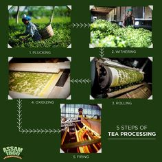 The journey of #Assam1860 from the lush estates of #Thowra to your home. #TeaAsItShouldBe #TeaLove #GourmetTea