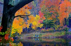 Fall Panorama