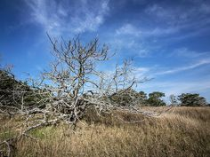 Fort Macon State Park opens new hiking trail