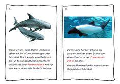 Delfine - mit mehr Text für die 2.-4. Klasse