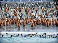 Pinguins na Antárctica