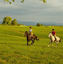 Virginia Horse Center. Lexington, VA.  Virginia is for Horse Lovers.