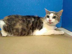 One of 4 cats on tonites to be murdered list at the NYC ACC!  Please adopt, foster, pledge & SHARE!