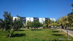 Cielo azul en @umnoticias. Facultad de Economía y Empresa al fondo. #Universidad de #Murcia #Spain #bluesky #greengrass #Winter #instaplaces