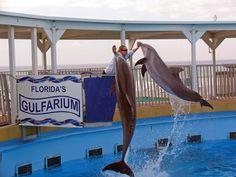 Gulfarium - Destin, FL...small, but very good!