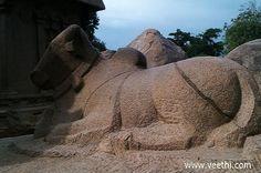 Nandi Statue near Mamallapuram Pancha Rathas