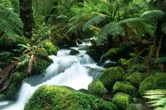 Tropical+waterfall | Nature : Waterfall Tropical Waterfall Landscape Nature 1280x862 Pixel