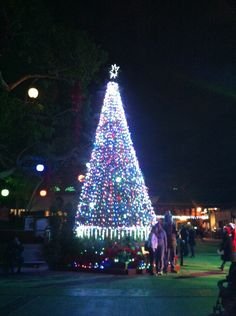 Christmas Tree at San Diego Zoo