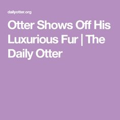 Otter Shows Off His Luxurious Fur | The Daily Otter