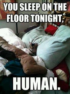 I love cat memes