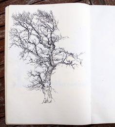 Carnet d'arbres / Suite