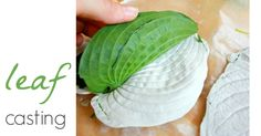 A tutorial for leaf casting with plaster of Paris to create beautiful, 3-dimensional leaves for fun and decoration. After casting, you can paint the leaves.