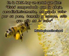 En la NASA hay un cartel que dice: Aerodinámicamente la abeja no puede volar por su peso, tamaño y cuerpo, solo que ella no lo sabe.