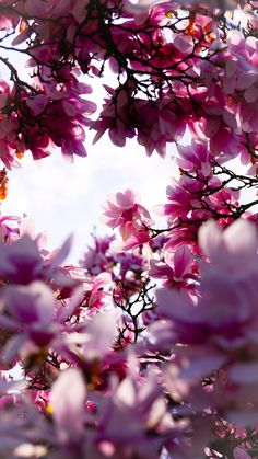 Hello Spring Wallpapers for Iphone Mobile Blue Glitter Wallpaper, Frühling Wallpaper, Hello Spring Wallpaper, Pink Photo, Blooming Flowers, Flowering Trees, Love Pictures, Purple Flowers, Beautiful World