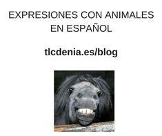 Spanish Expressions with animals. Expresiones en español con animales. #Spanish #español