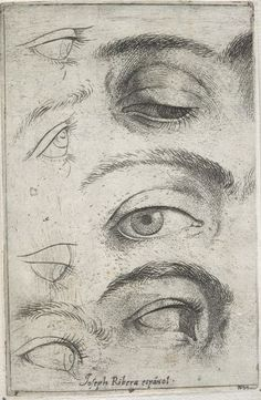 Portrait Drawing Studies Of Eyes - 1622 - Jusepe de Ribera, Spanish (Játiva, Valencia 1591 - 1652 Naples) Pencil Art Drawings, Drawing Sketches, Eye Drawings, Drawing Tips, Figure Drawing, Painting & Drawing, Eye Study, Harvard Art Museum, Drawing Techniques