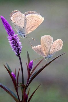 This photo would make a lovely painting, purple flowers and butterfly. Beautiful Bugs, Beautiful Butterflies, Amazing Nature, Beautiful World, Beautiful Flowers, Beautiful Pictures, Beautiful Things, Beautiful Dream, Simply Beautiful