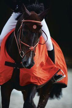 .equestrian hunter jumper dressage horse