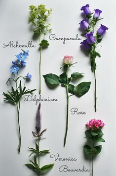 Looking for inspiration for your summer bouquets? In summer, there are so many flowers to choose from, mix and match to create a unique bouquet. All Flowers, Types Of Flowers, Fresh Flowers, Paper Flowers, Beautiful Flowers, Wedding Flowers, Ikebana, Seed Packaging, Flower Meanings