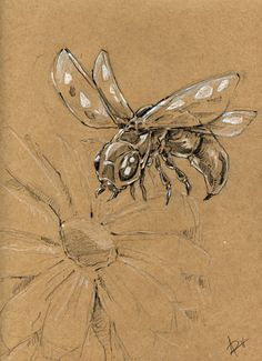 Original Sketch Insect by ArtisanDream on Etsy, $10.00
