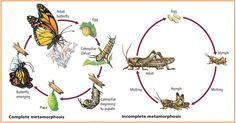 pdk: hmyz :: Biológia
