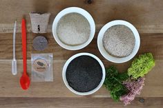 Attention green friends: my second kit with Makers Kit drops today! It was a recent obsession with cultivating my own green thumb (more on that later) and a nostalgic rediscovery of sand art that inspired the concept… Terrarium Diy, Diy Originales, Plant Night, Sand Art, Planting Succulents, Succulent Plants, Diy Kits, Diy And Crafts, Easy Diy