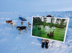 Global Warming  Inuit Johnny Issaluk holds a recent photo of a South Carolina swamp. That's what his home, near the Arctic Circle on Baffin Island, would have looked like 56 million years ago, when summer water temperatures at the North Pole hit 74°F. Photo: Ira Block