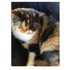 Cute little cat ❤️