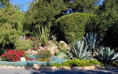 texas drought tolerant landscapes | beautiful landscape, filled with succulents and other drought-tolerant ...