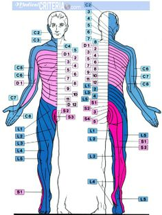 Pin by Jean-Philippe Boullé on Osteopathy Muscle Anatomy, Body Anatomy, Human Anatomy, Cervical Spinal Stenosis, Nerve Anatomy, Chiropractic Clinic, Spine Health, Medical Anatomy, Weight Loss Surgery