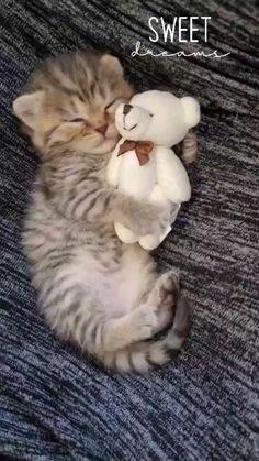 Funny Cute Cats, Cute Baby Cats, Cute Cat Gif, Cute Cats And Kittens, Cute Funny Animals, Kittens Cutest, Cute Dogs, Cute Cat Video, Cute Wild Animals