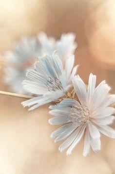 Wildflower photograph