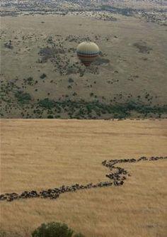 Een droom komt uit: Ballonvaart boven de Masai Mara