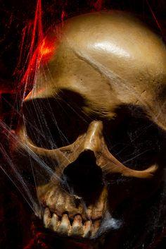 Evolution Tattoo, Skull Reference, Human Skull, Skull Tattoos, Single Image, Unique Image, Skull Art, Color Inspiration, Skulls