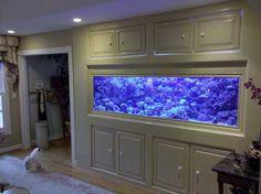 Have a huge aquarium at home