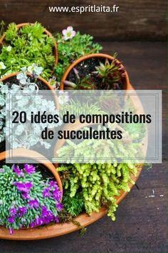 Cactus, Plants, Gardens, Succulent Plants, Flower Arrangements, Plant, Planets