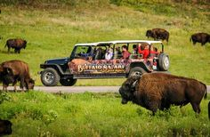 Best Safaris in the US