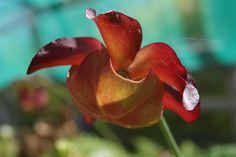 flower !