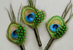 T boutounniere: Peacock boutonnieres - göra egen, ca 50 kr/st?