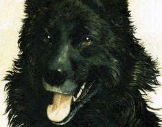 1874-1963 Ch. Manciet Lithographie couleur, numérotée et signée, Portrait de chien noir, Berger belge de la boutique sofrenchvintage sur Etsy