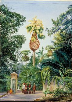 Talipot Palm. Ceylon. Marianne North.