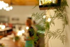 #plumosa fern Austin, TX: Pop Up Dinner   @InkedFingers + @thepeachedtortilla + Argus Cidery + @Gypsy Soul Floral and Events