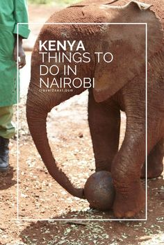 Baby elephants, friendly giraffes and other wildlife are the focus of attention in Kenya's capital. Here are 10 things to do in Nairobi.