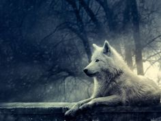 Night of the Wolf - @deviantART
