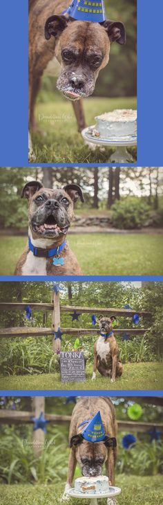 44 Best Dog Birthday Party Images