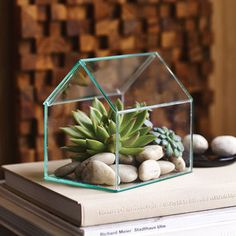 The Greenhouse Terrarium allows your creativity to grow. Crafted by hand, the roof panel lifts off, making it easy to insert a natural assortment of succulents. Or use it to display flickering tea candles or votives in your bedroom, or a favorite treasure Air Plants, Indoor Plants, Greenhouse Shed, Greenhouse Film, Cactus Plante, Pot Jardin, Paludarium, Cactus Y Suculentas, Succulent Terrarium