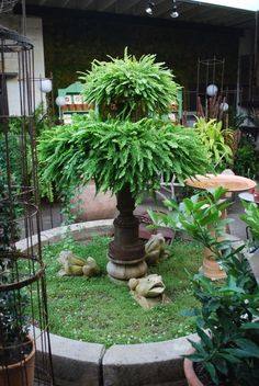 Garden Design Ideas : Ferns on old water fountain for shade side of houseWOW this would look great