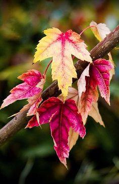 leaves ~